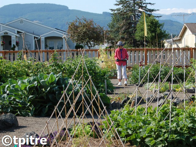 Community Garden at June Robinson Park